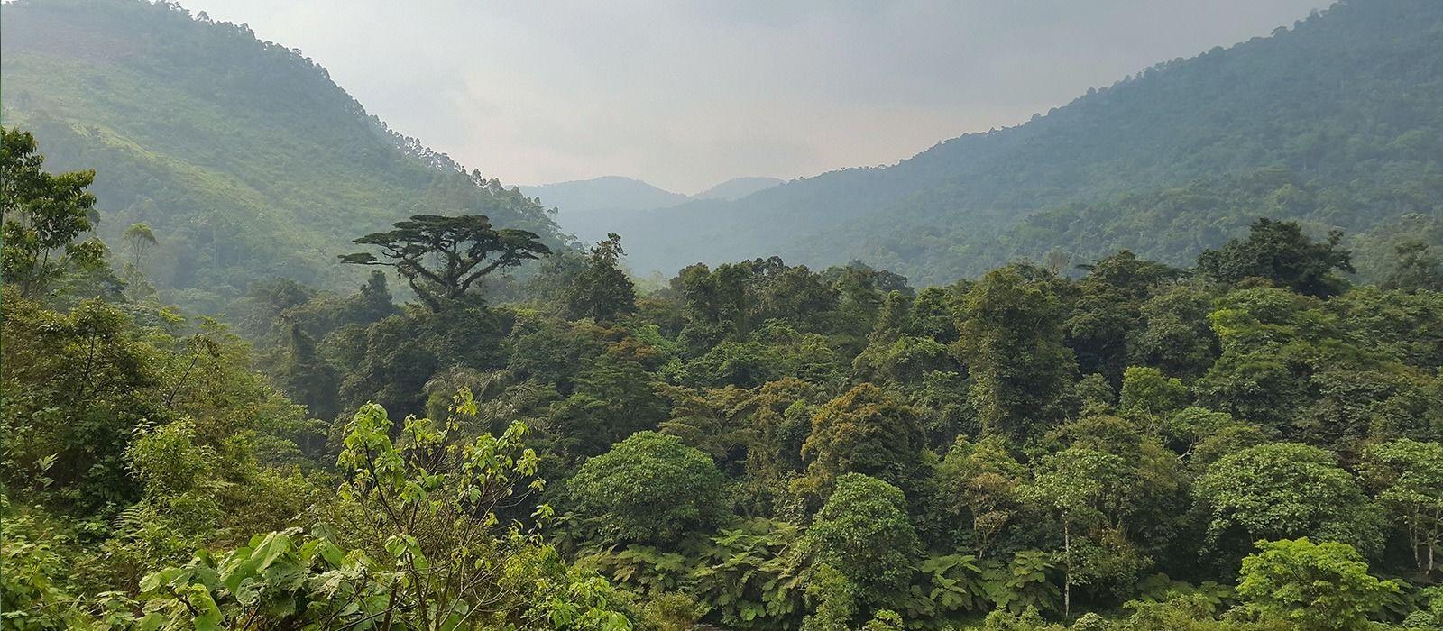 Destination Kibale Uganda