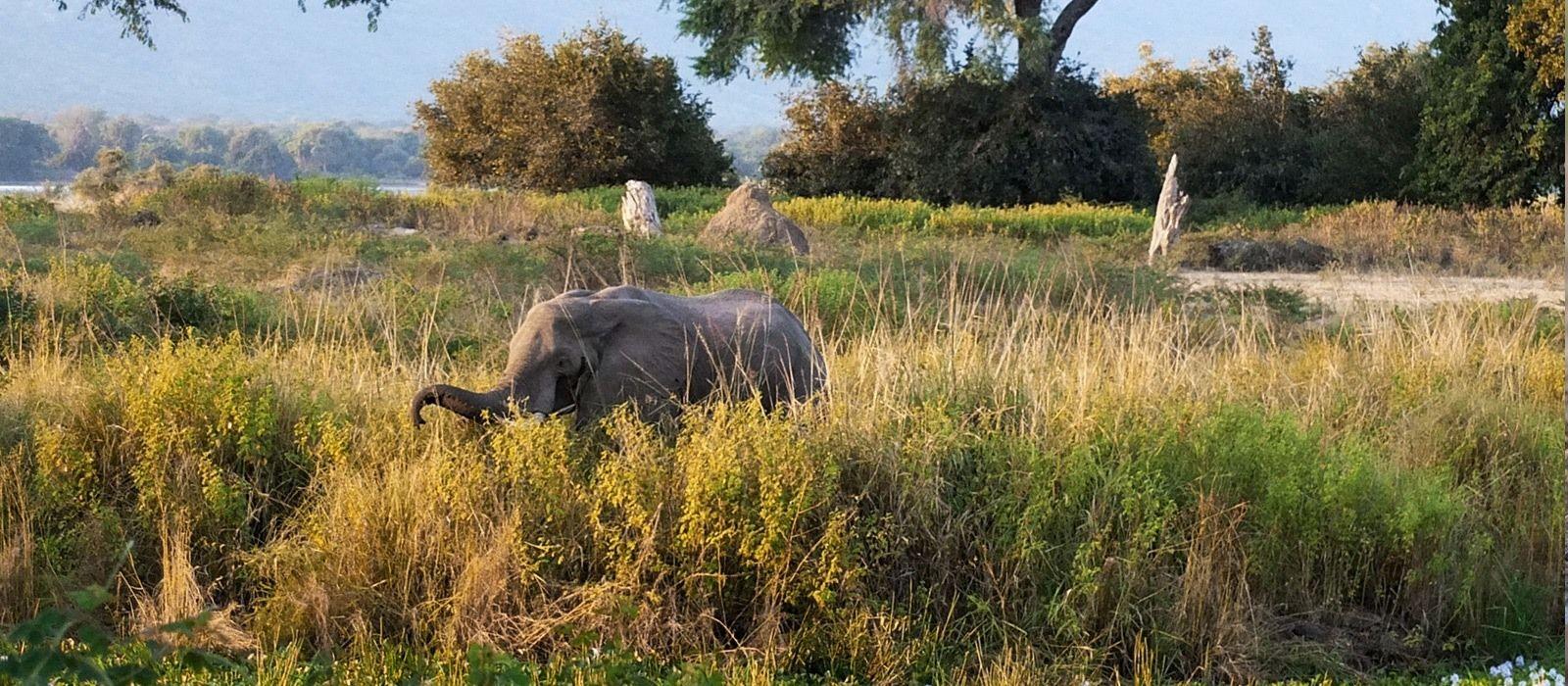 Classic Zimbabwe: Waterfalls and Wildlife Tour Trip 4
