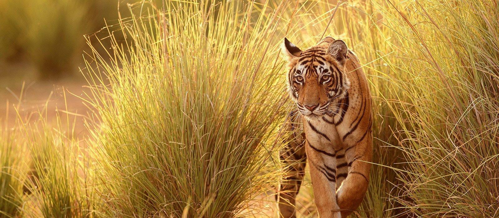 Im Land der wilden Tiger Urlaub 1