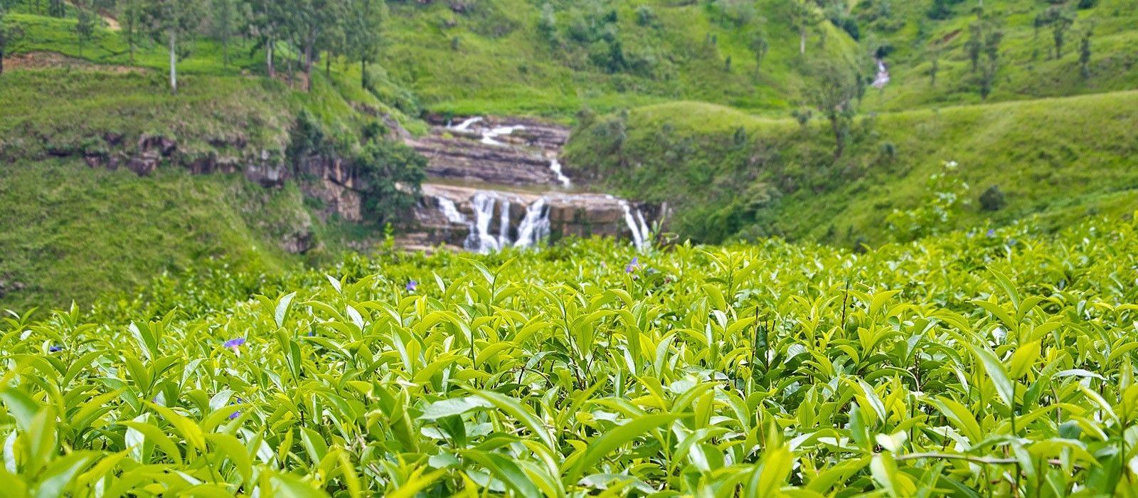 Culture and Beach Wonders of Sri Lanka Tour Trip 4