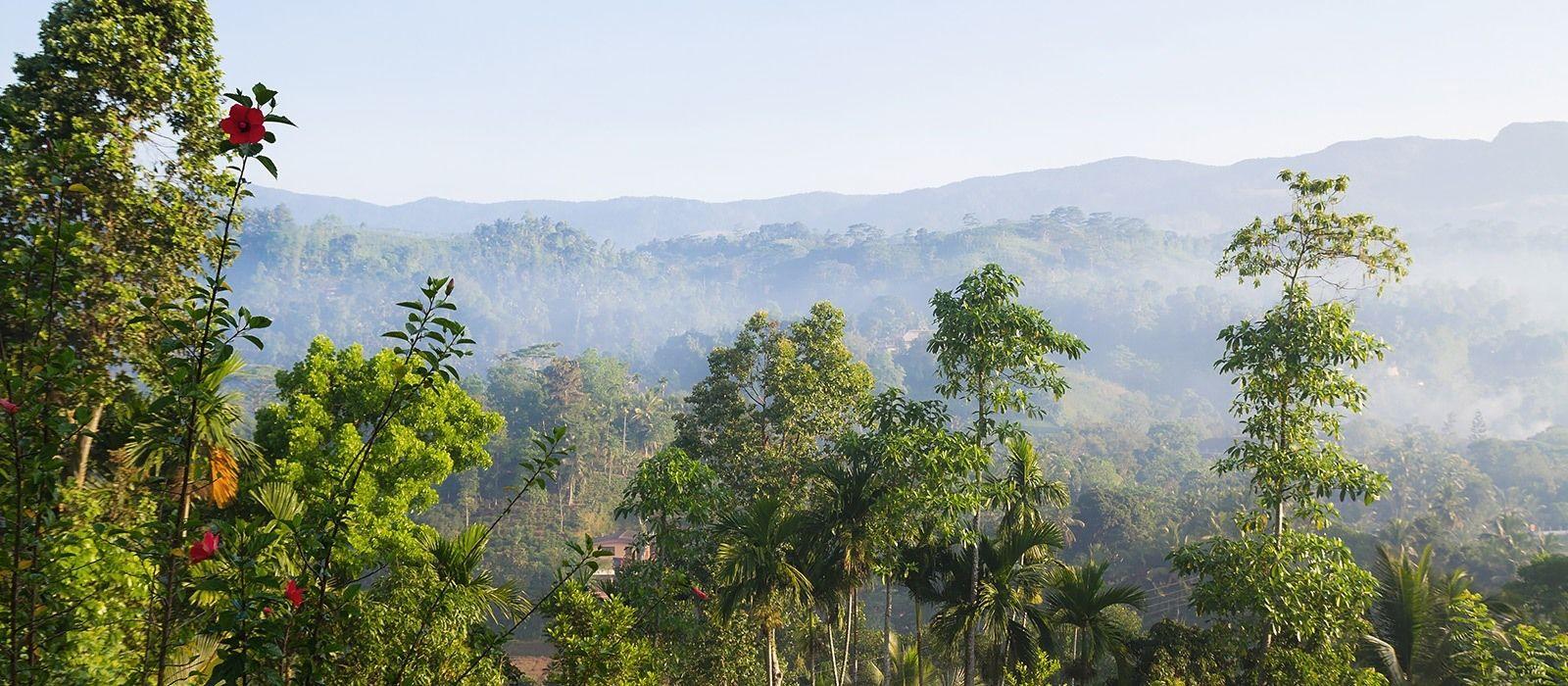 Destination Rainforest Sri Lanka