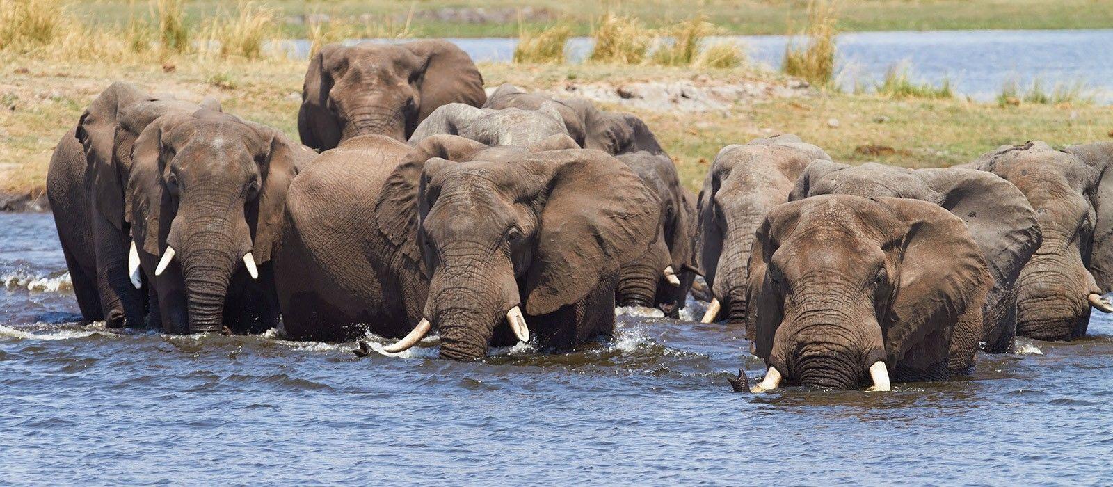 Naturreise in Simbabwe & Botswana: Wasserfälle & Wasserwege Urlaub 3