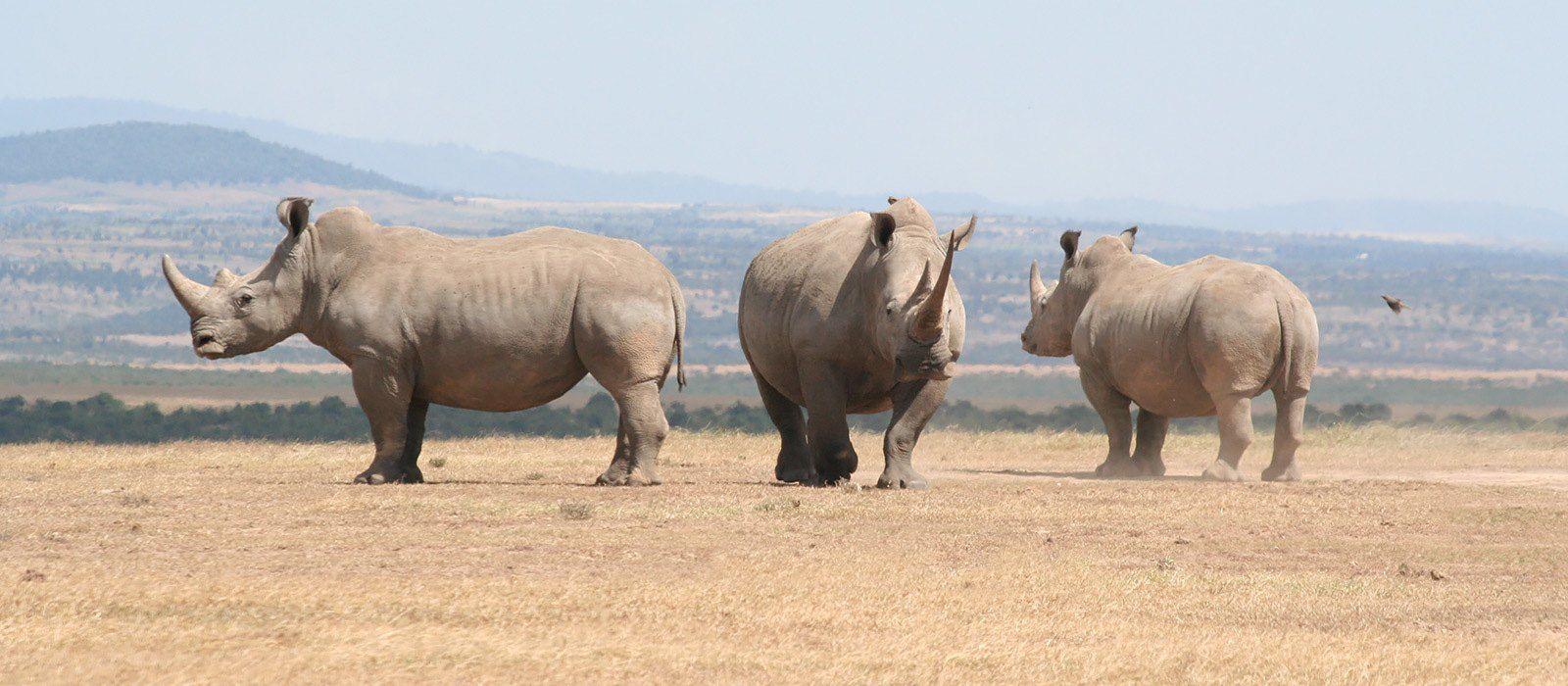 Kenia und Tansania: Kamel Trekking und Strandurlaub Urlaub 2