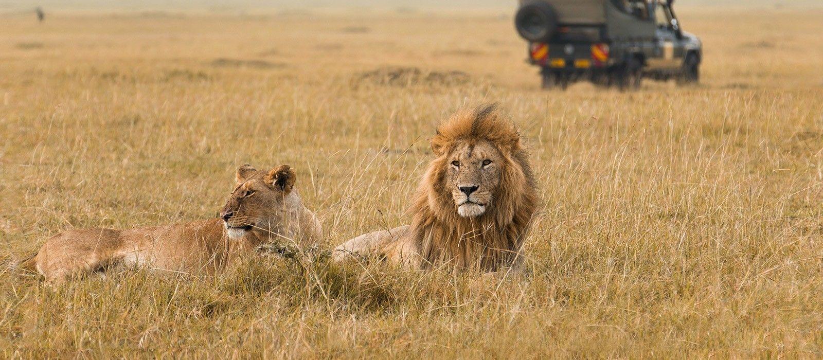 Safari Highlights of Kenya Tour Trip 4