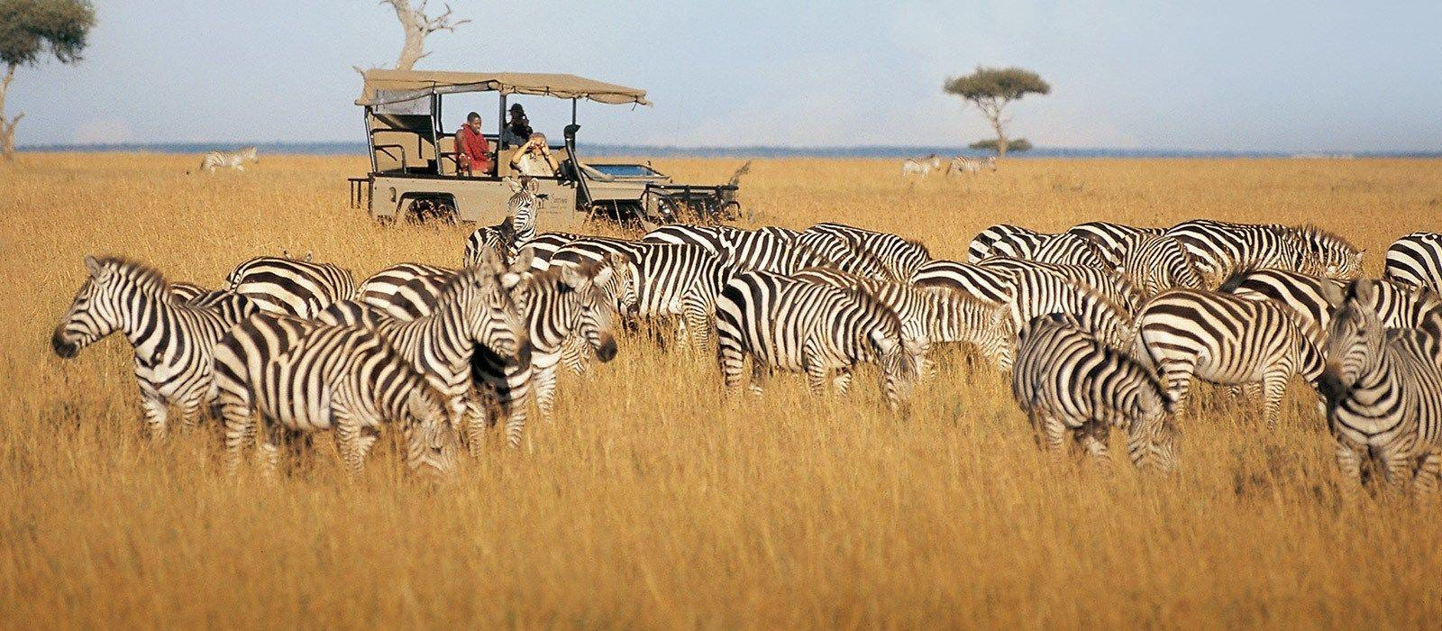 Von Kenia bis Sansibar: Safaris & Strände Urlaub 2