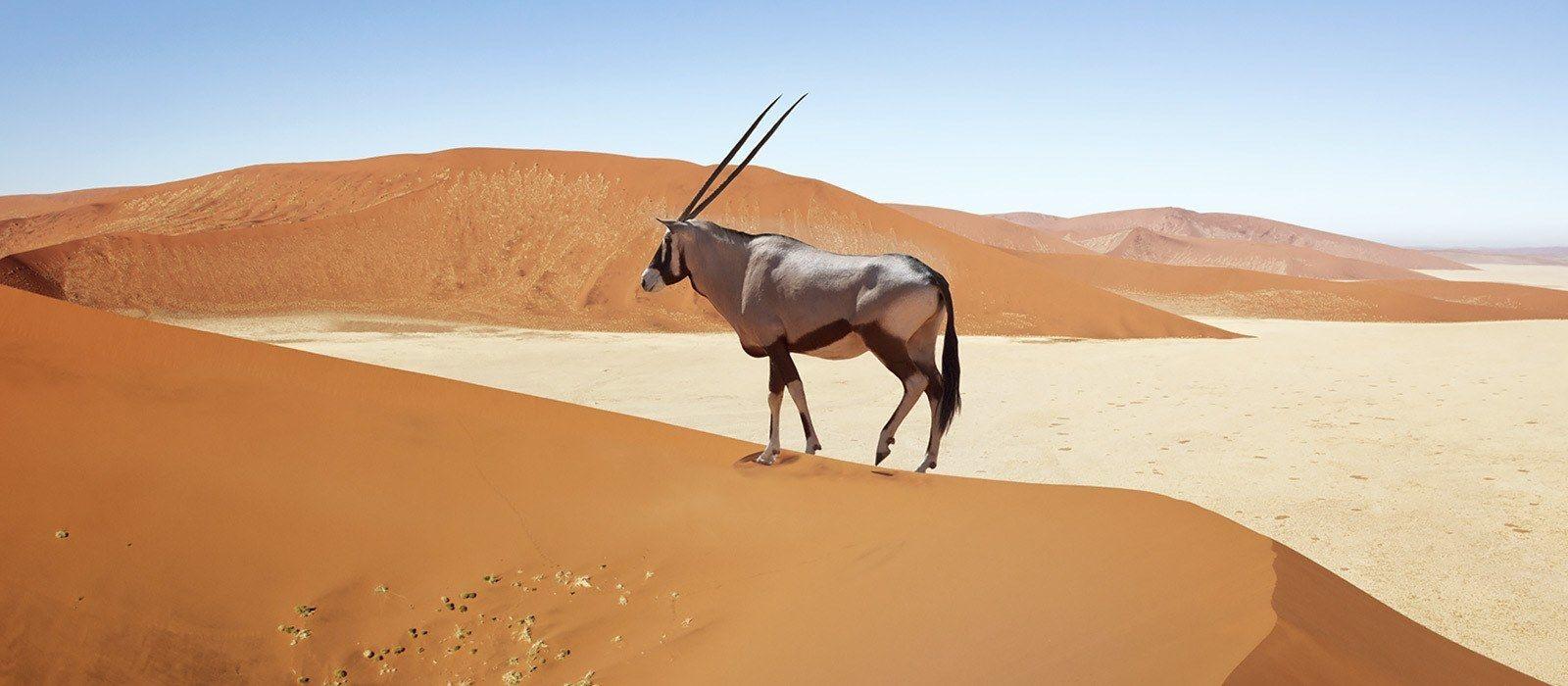Classic Namibia and Botswana Overland Tour Trip 2