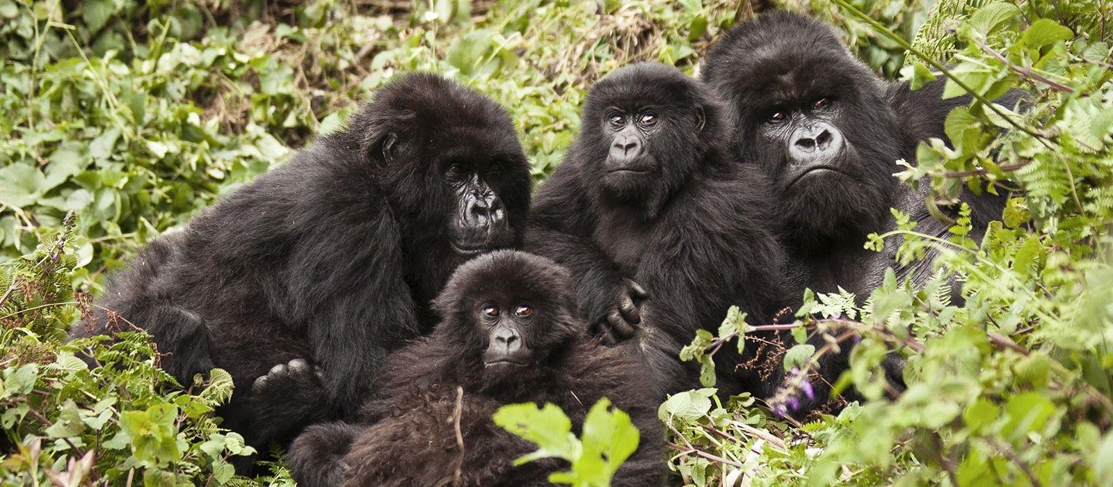 Ruanda & Tansania: Gorilla Trekking & geheimnisvolles Sansibar Urlaub 2