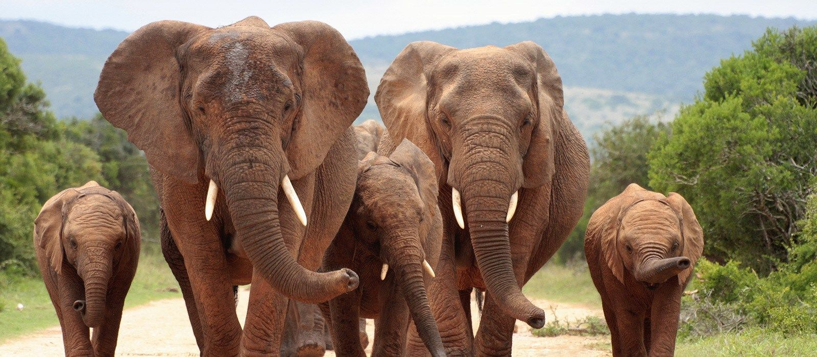 South Africa – Western and Eastern Cape Tour Trip 4