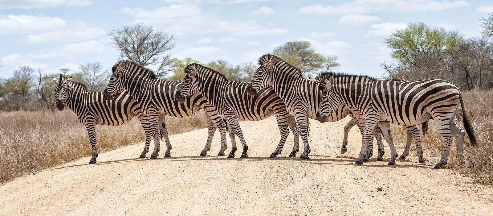 Safari & Traumstrände im südlichen Afrika Urlaub 2