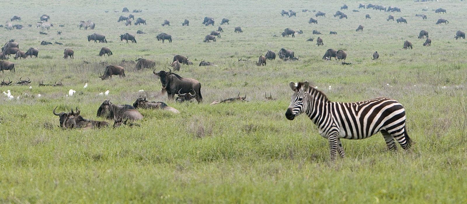 Reiseziel Tarangire Tansania