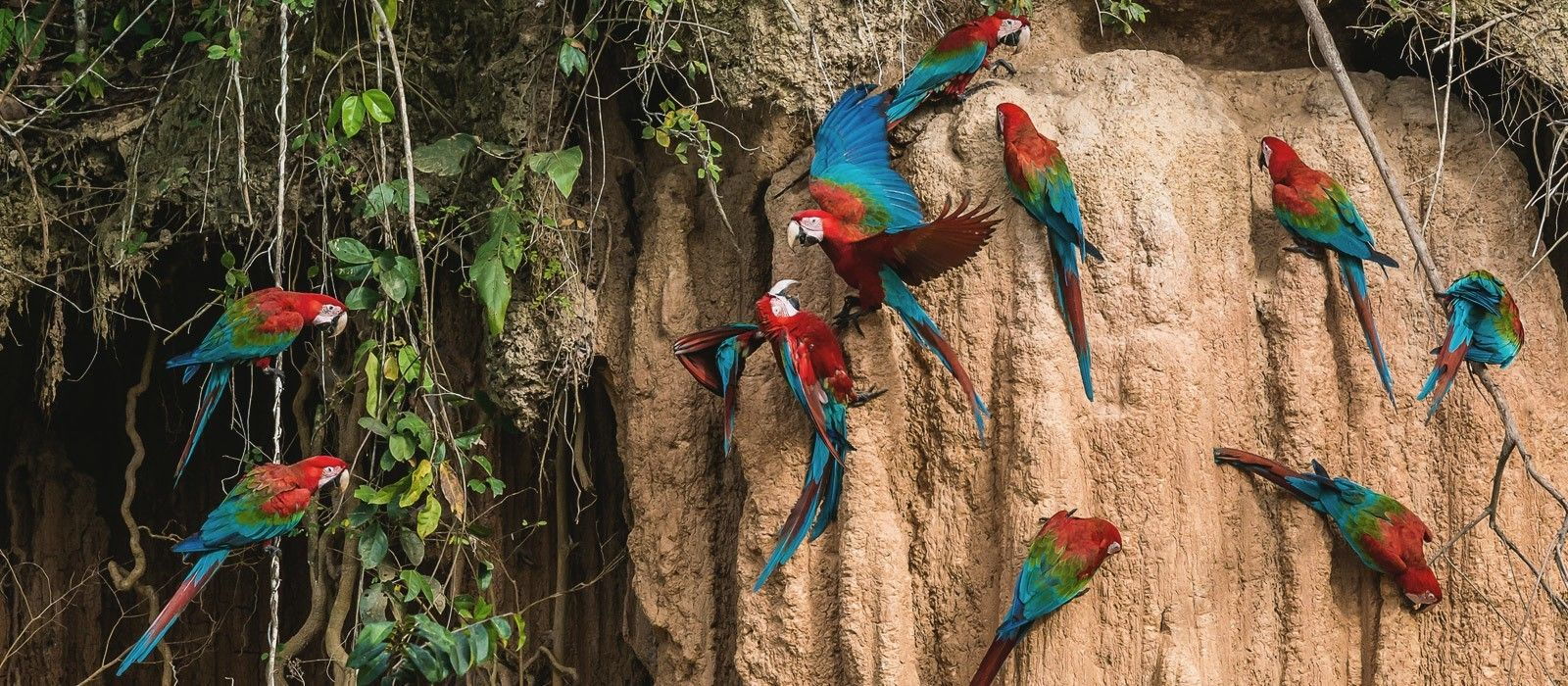 Naturparadies Brasilien – Wasserfälle, Regenwald und Amazonas Urlaub 1