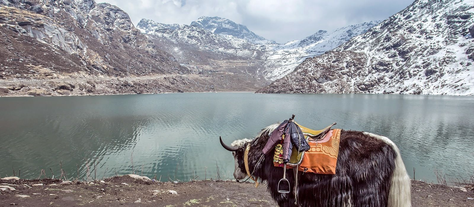 Darjeeling: Teegenuss & Berge Urlaub 7