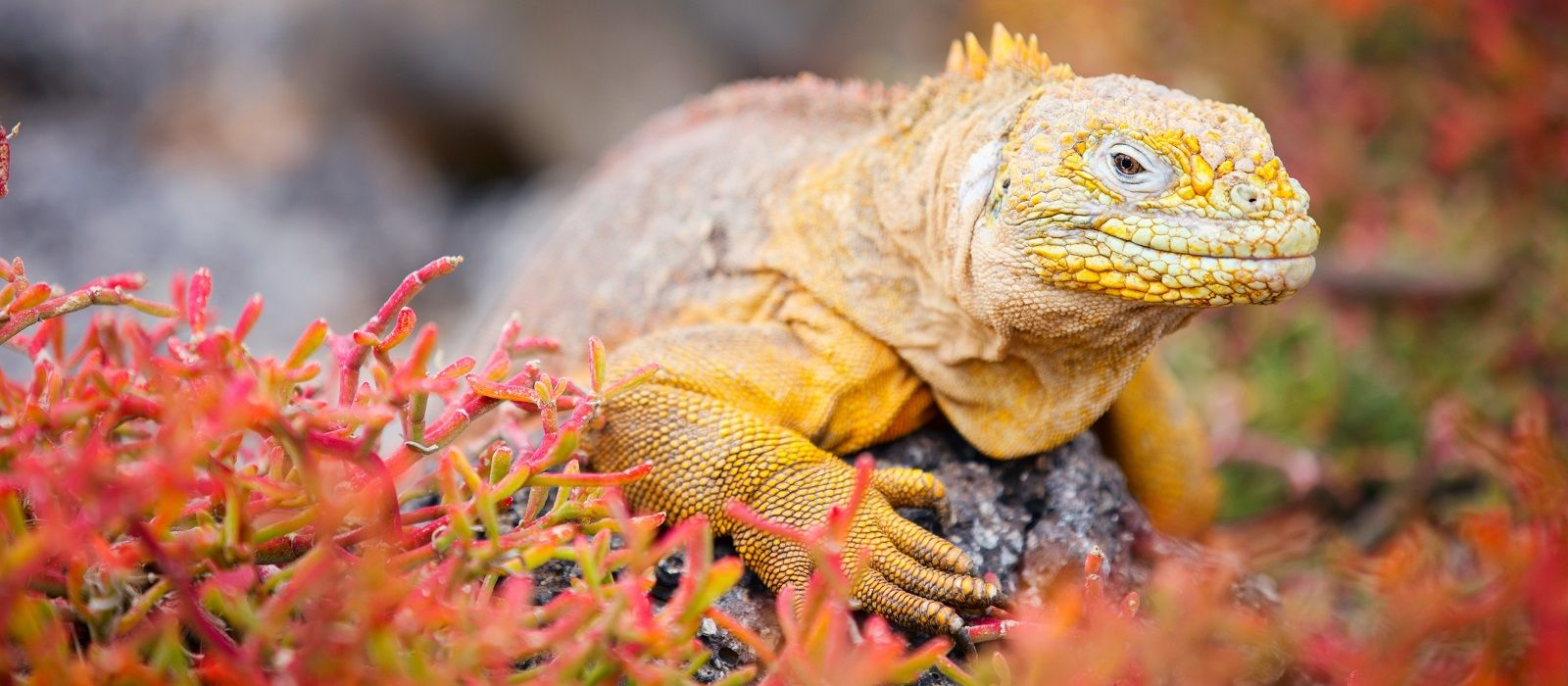 Ecuador: Galapagos, Traditions and Chocolate Tour Trip 6
