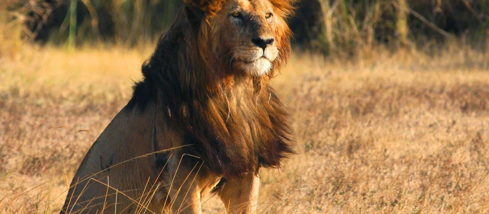 Tansania, Simbabwe & Botswana: Vom Kilimandscharo zu den Viktoriafällen Urlaub 3