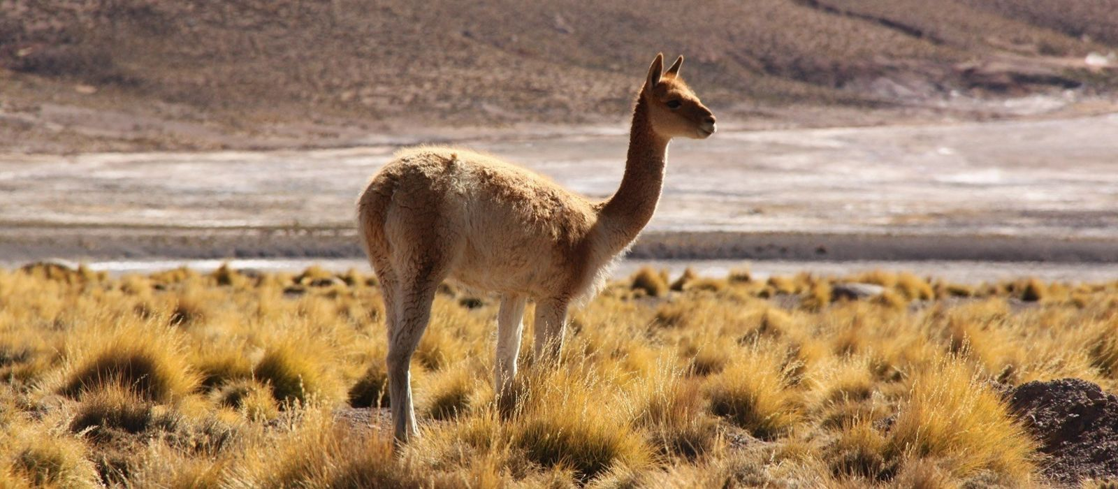 Chile Awasi: Außergewöhnlich mit Awasi Urlaub 8