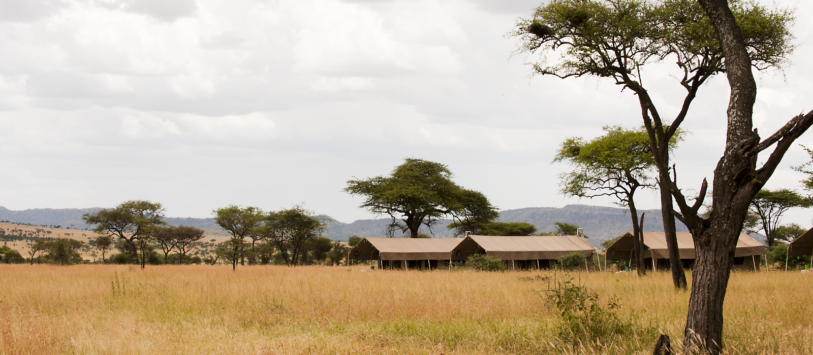 Hotel Serengeti Kati Kati Tented Camp Tansania