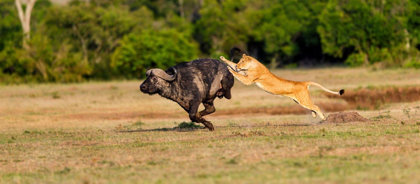 Kenia – Safari und Baden: Masai Mara & Traumstrände Urlaub 3