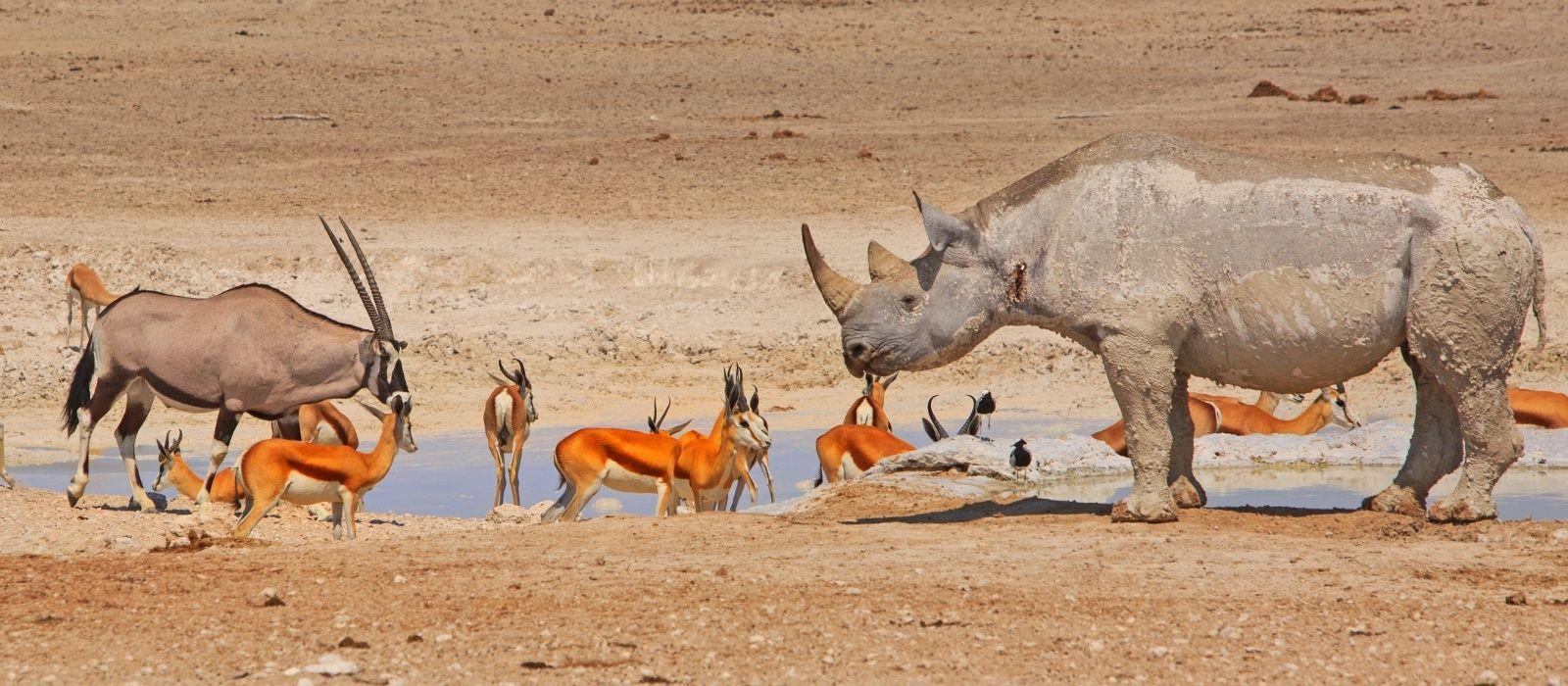Namibian Highlights, Safari and Waterfalls Tour Trip 4