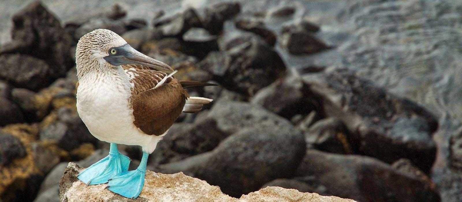 Ecuador – Die Geheimnisse von Galapagos Urlaub 1