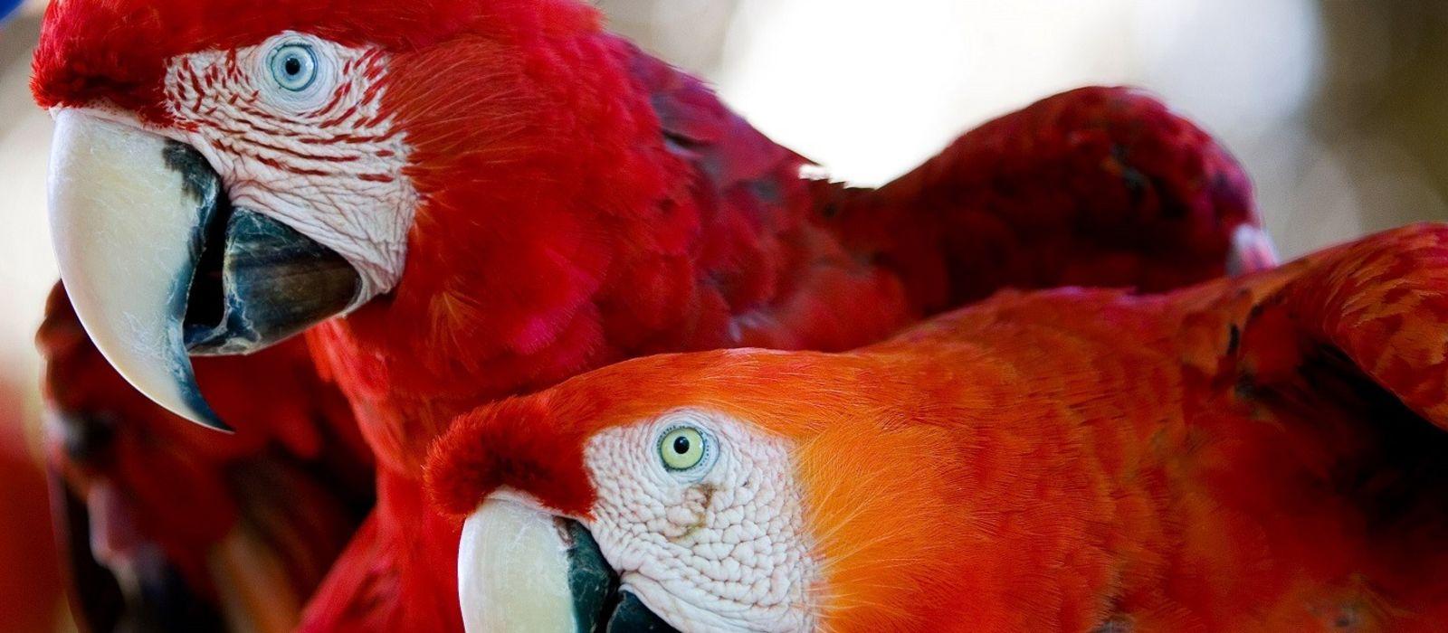 Brasilien: Lebensart und Wunder der Natur Urlaub 8