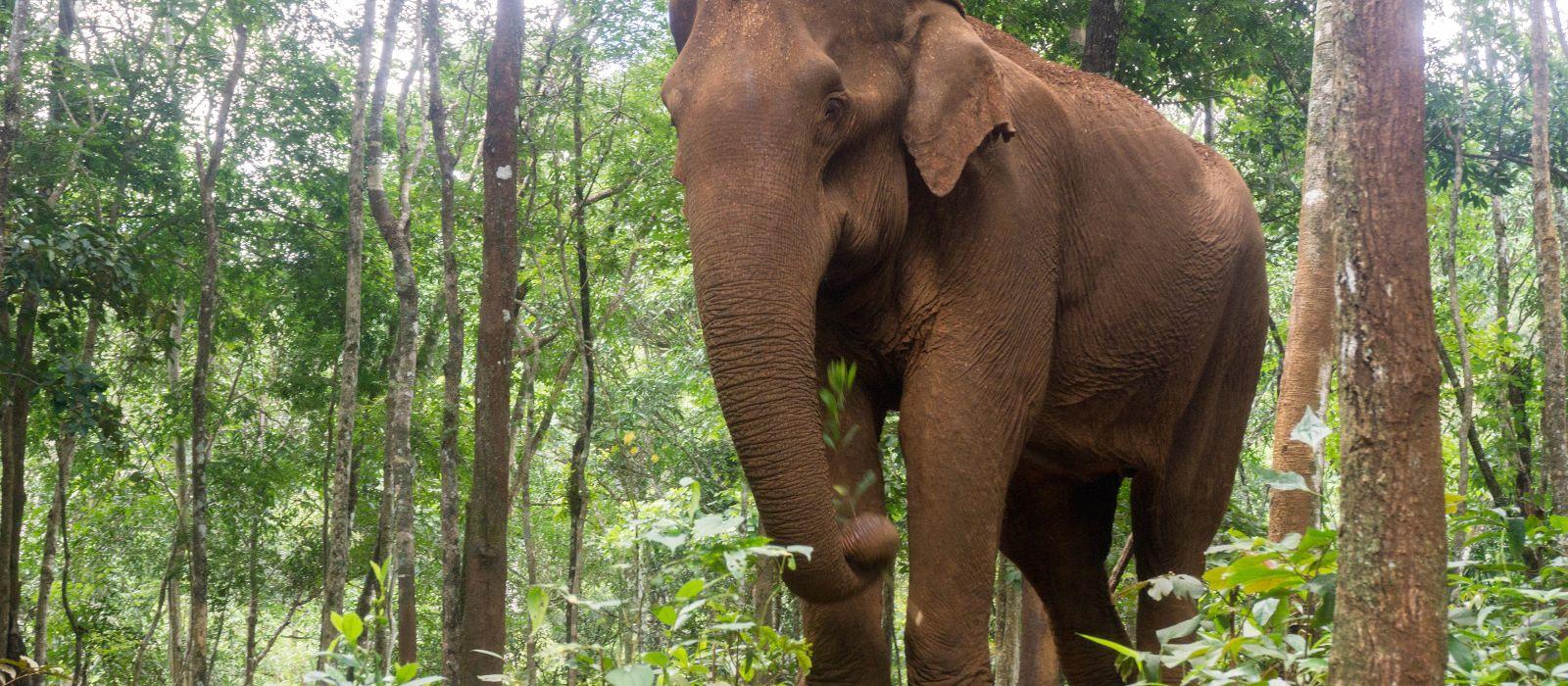 Bezauberndes Kambodscha und seine versteckten Reichtümer Urlaub 3