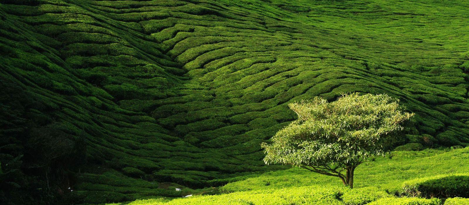 Highlights of Peninsular Malaysia Tour Trip 2