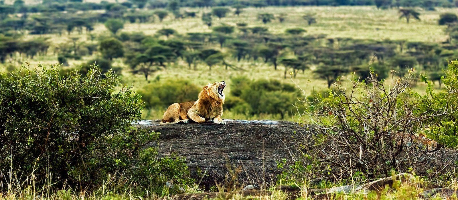 Tansania: Safari Abenteuer & romantisches Sansibar Urlaub 1