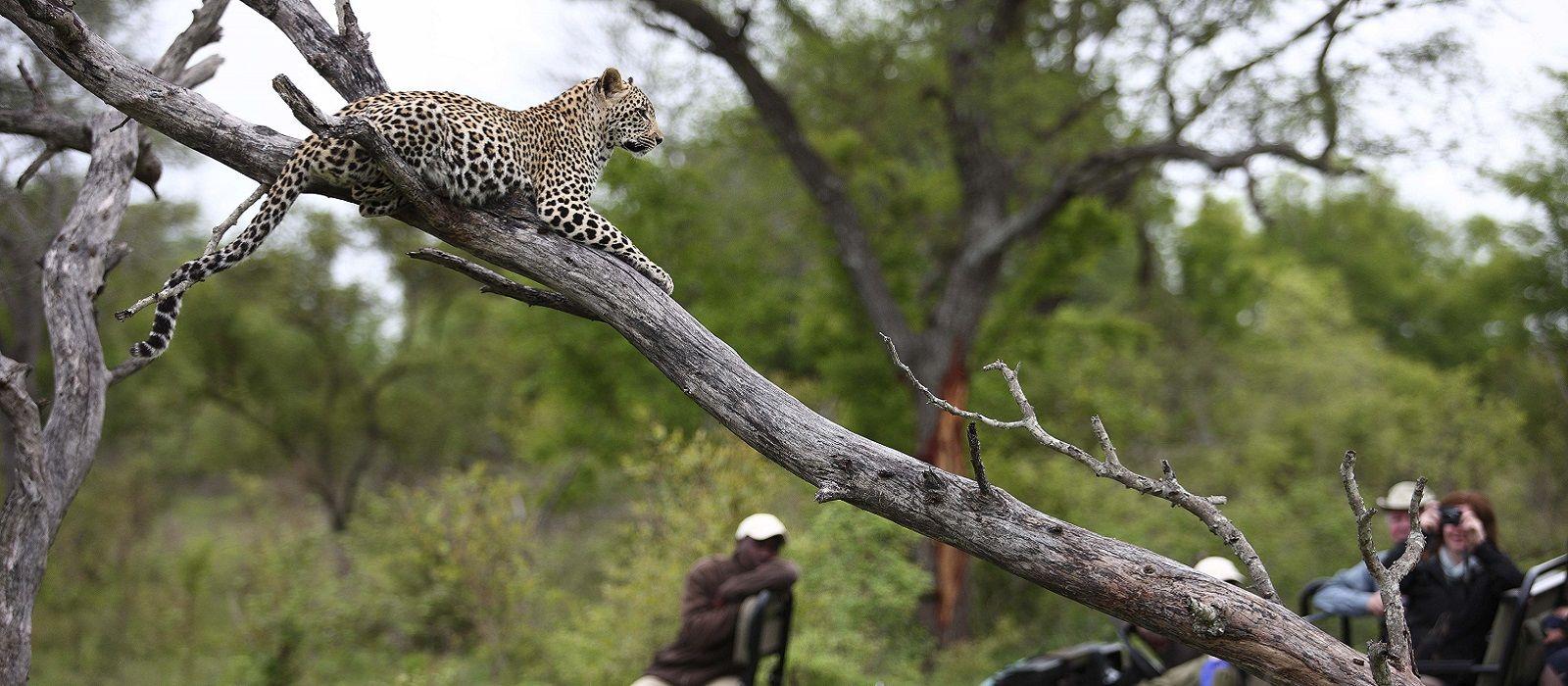 Südafrika: Kapstadt, Westkap und Krüger Nationalpark Urlaub 1