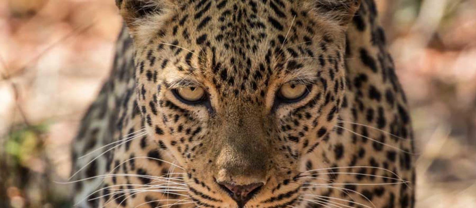 Sambia und Malawi: Viktoriafälle, Safari und See der Sterne Urlaub 1