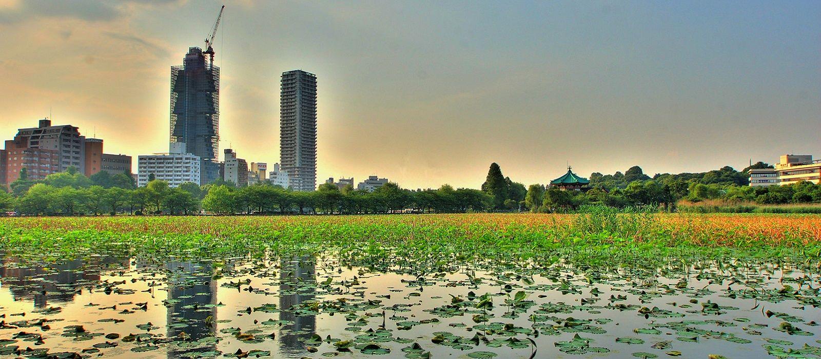 Just Japan – An Introduction Tour Trip 5