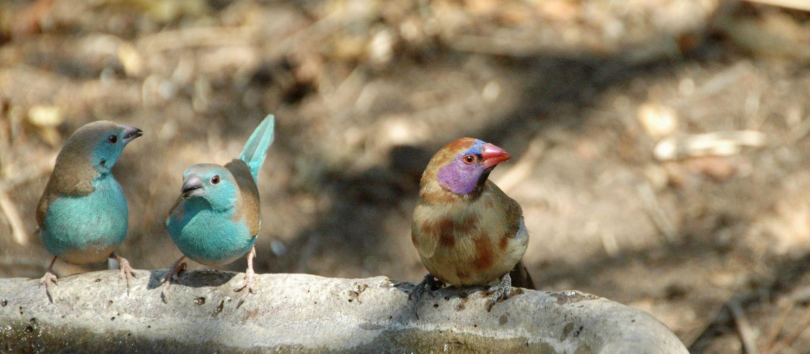 Südafrika und Seychellen: Kapstadt, Safari und traumhafte Inseln Urlaub 1