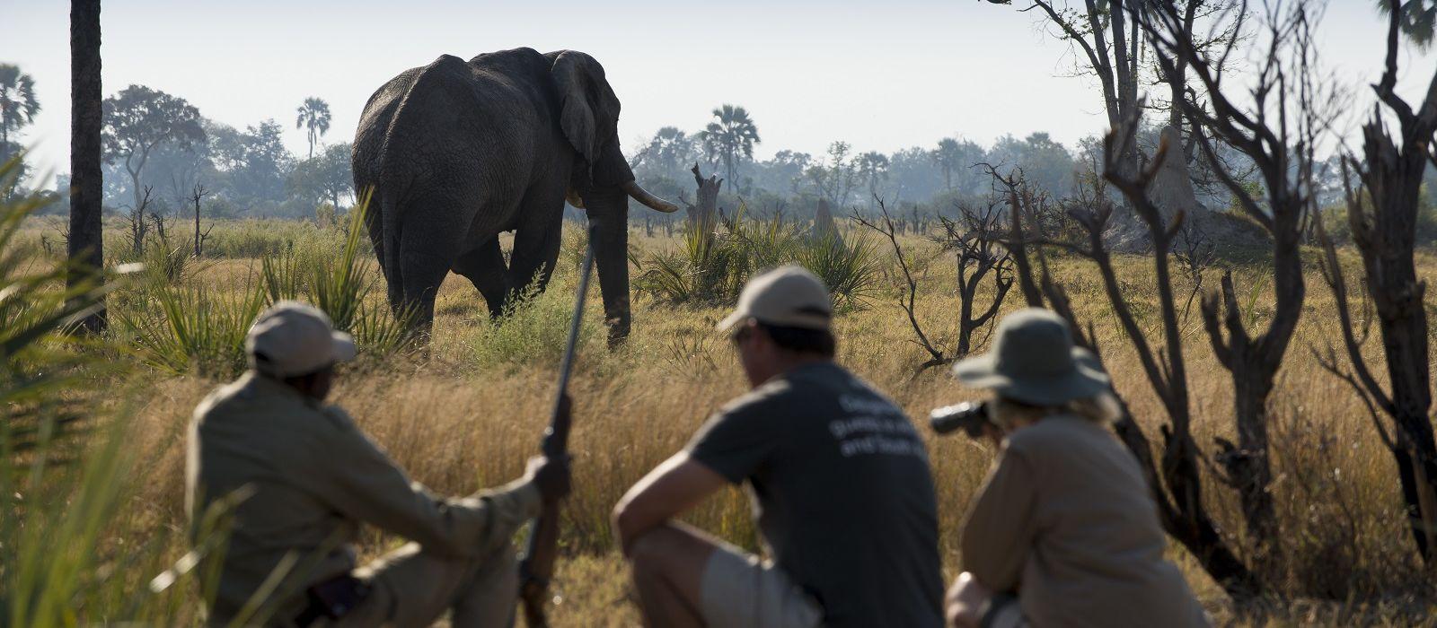 Wings over Botswana Tour Trip 2