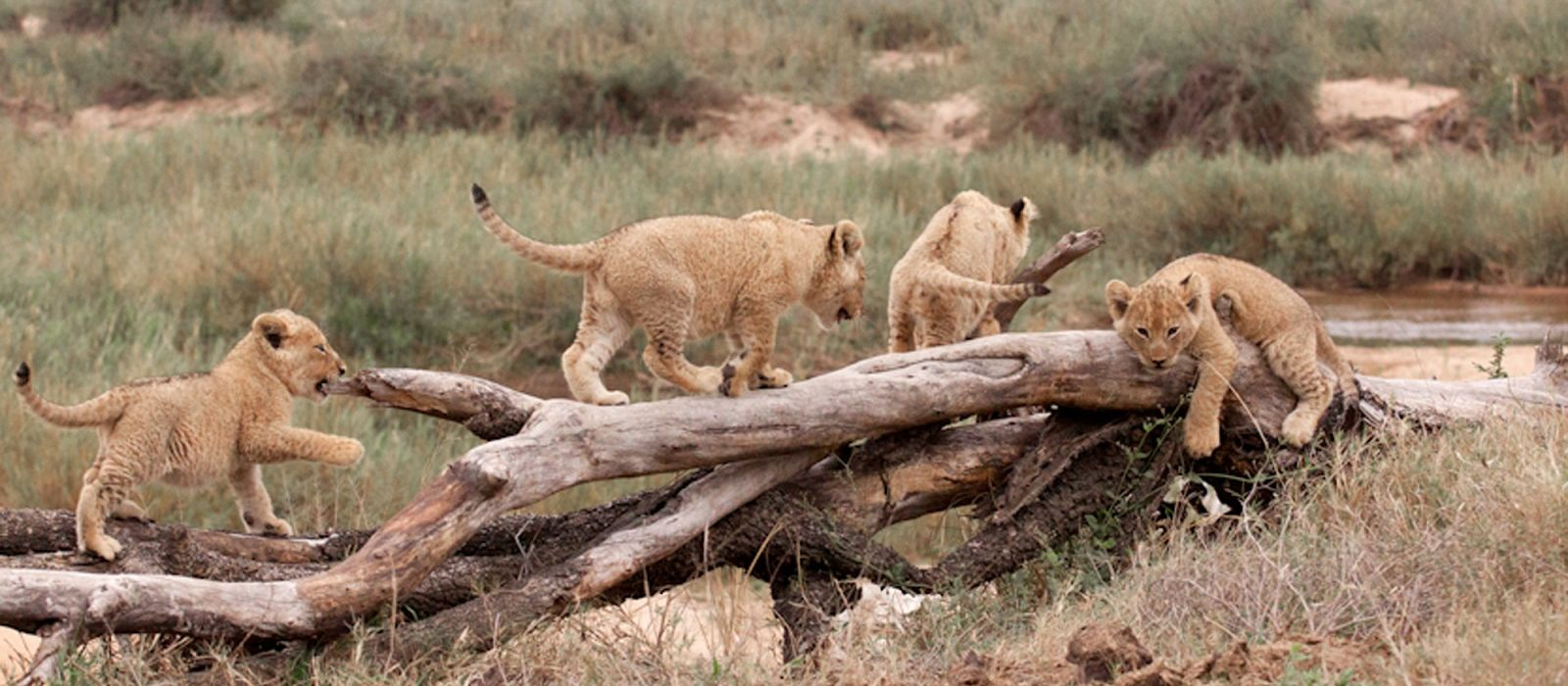 South Africa: Western Cape and Kruger Tour Trip 5