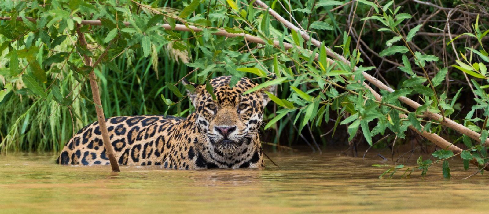 Amazon Rainforest and Beaches of Brazil Tour Trip 5