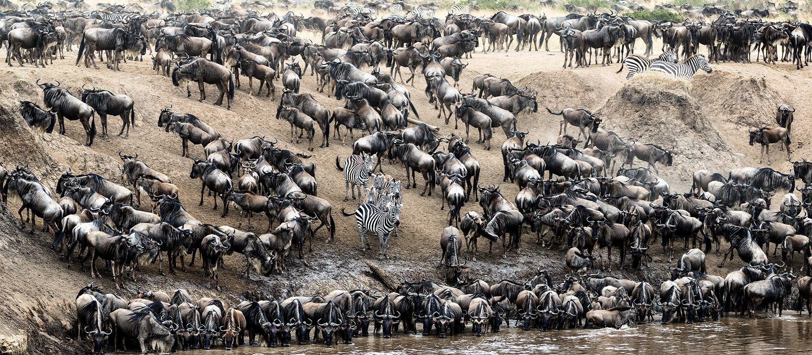 Atua Enkop Exklusiv: Kenia Safari und Strandurlaub Urlaub 3
