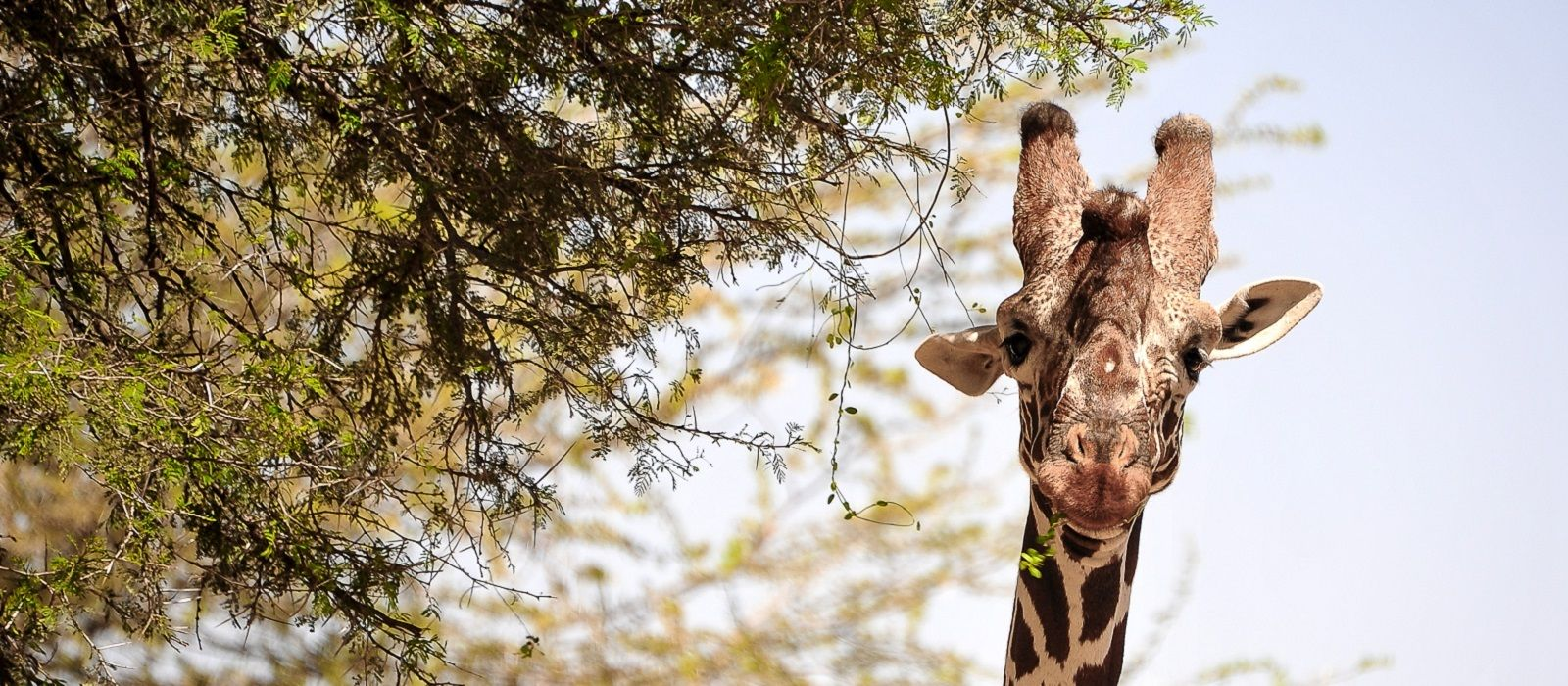 Atua Enkop Exklusiv: Kenia Safari und Strandurlaub Urlaub 2