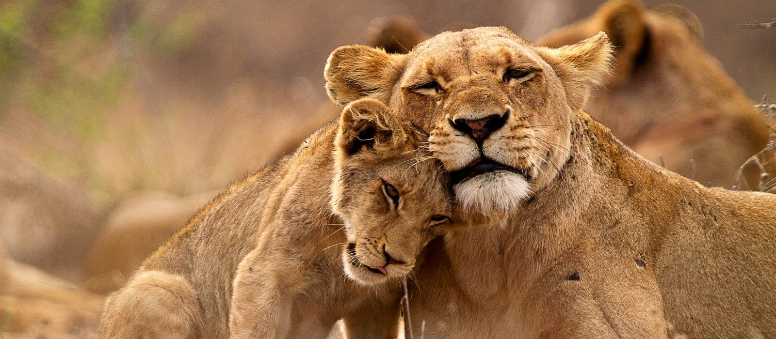 South Africa Tours & Trips