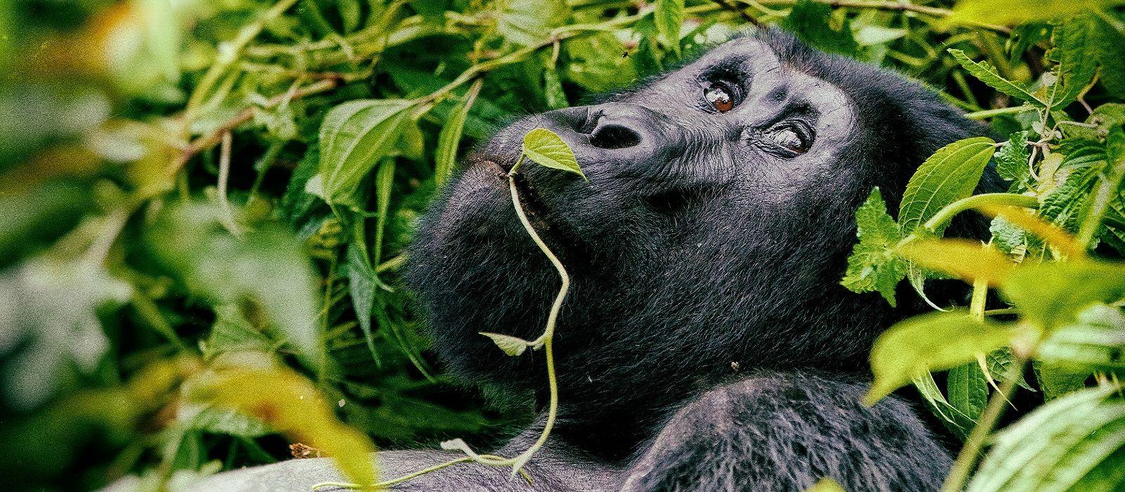 Rwanda Tours & Trips