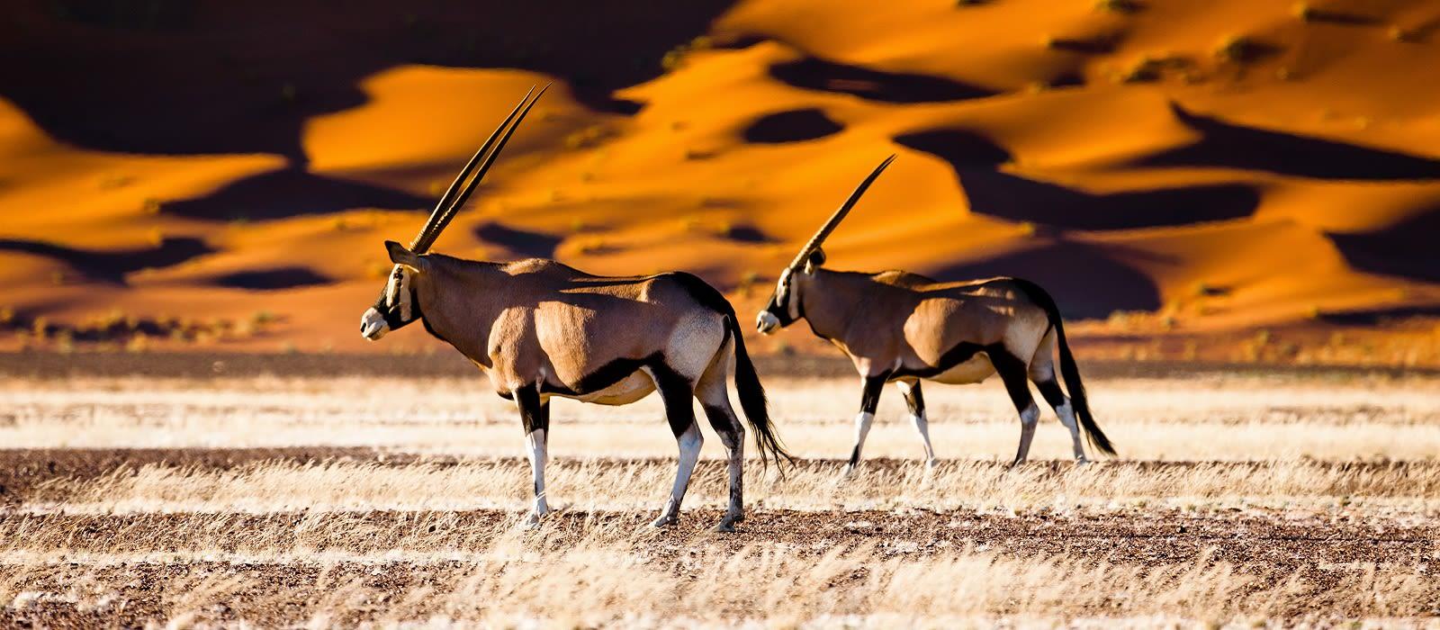 Große Namibia-Familientour für Selbstfahrer Urlaub 3