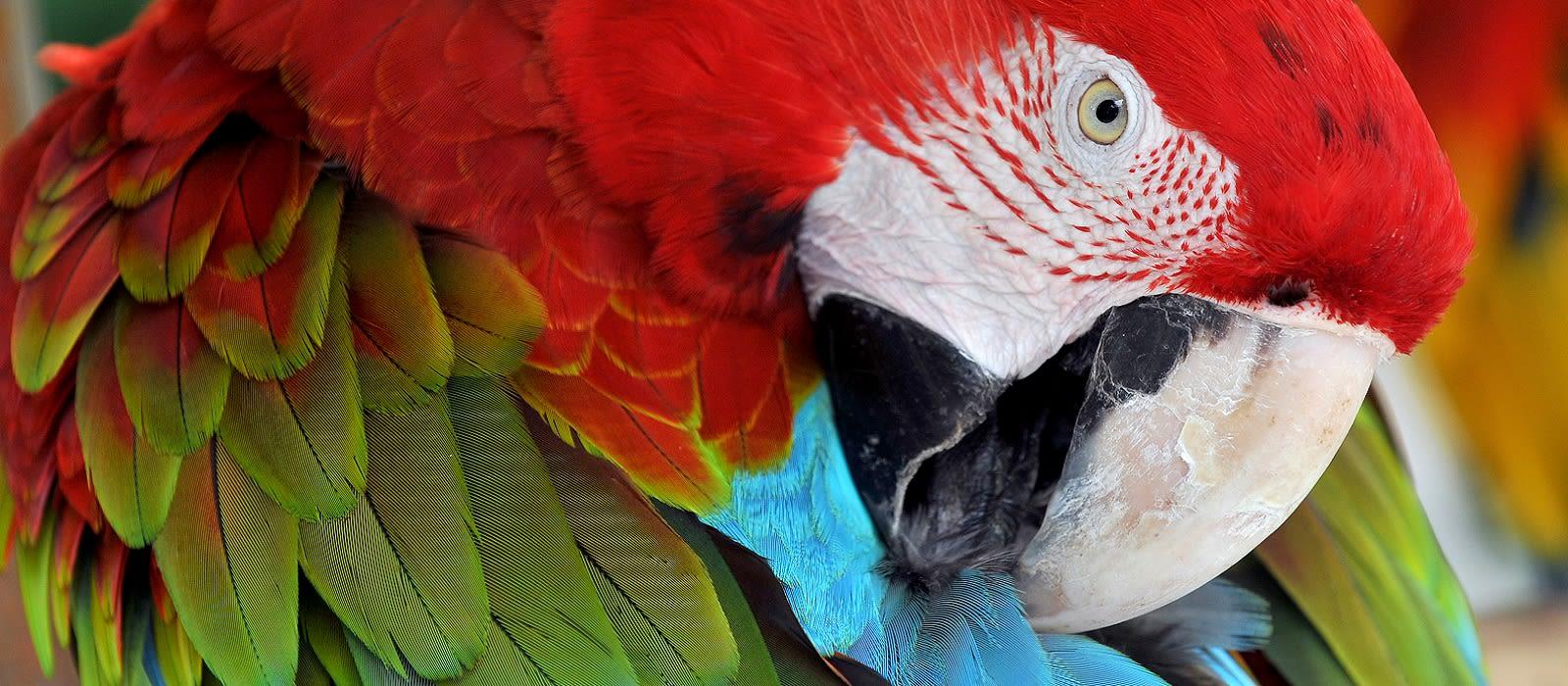 Exotische Vögel & Bezaubernde Landschaften – Vogelbeobachtung in Guatemala Urlaub 1
