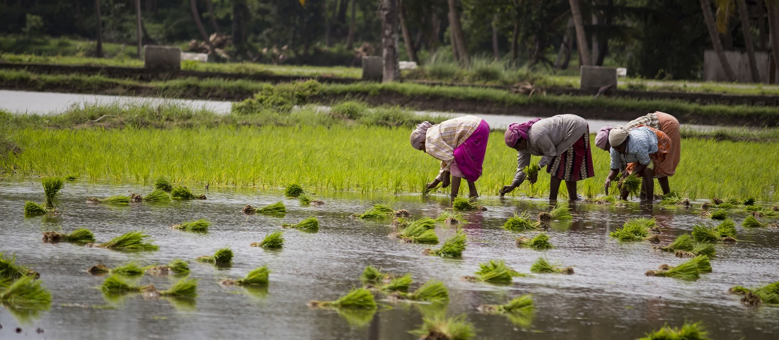 Backwaters of Kerala – Australia Special Tour Trip 5