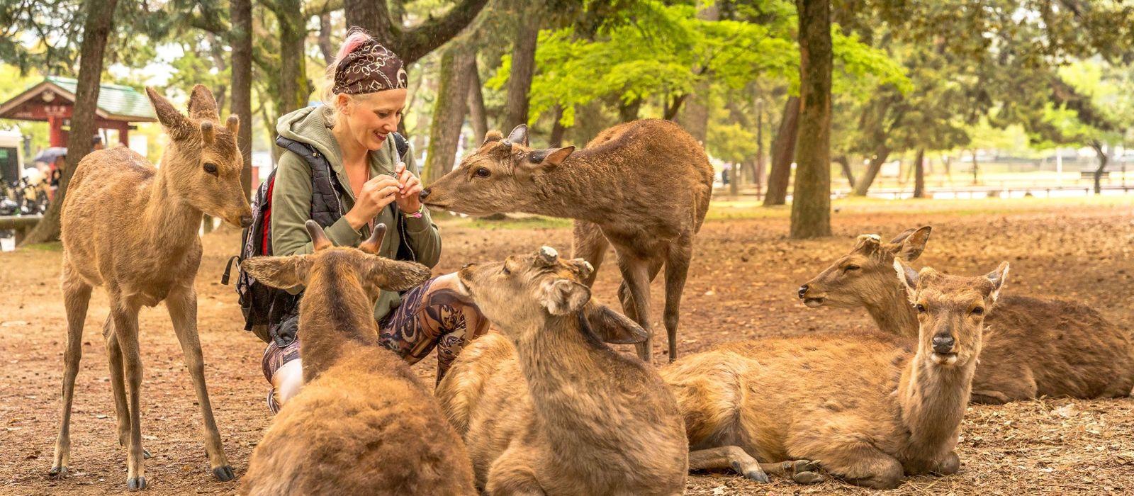 Japan: Northern Gems, Nature and Wildlife Tour Trip 2