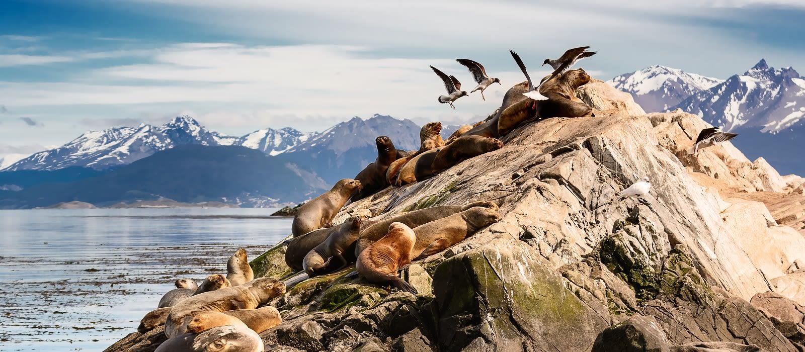 Die unberührte Schönheit Patagoniens & Abstecher in die Antarktis Urlaub 6