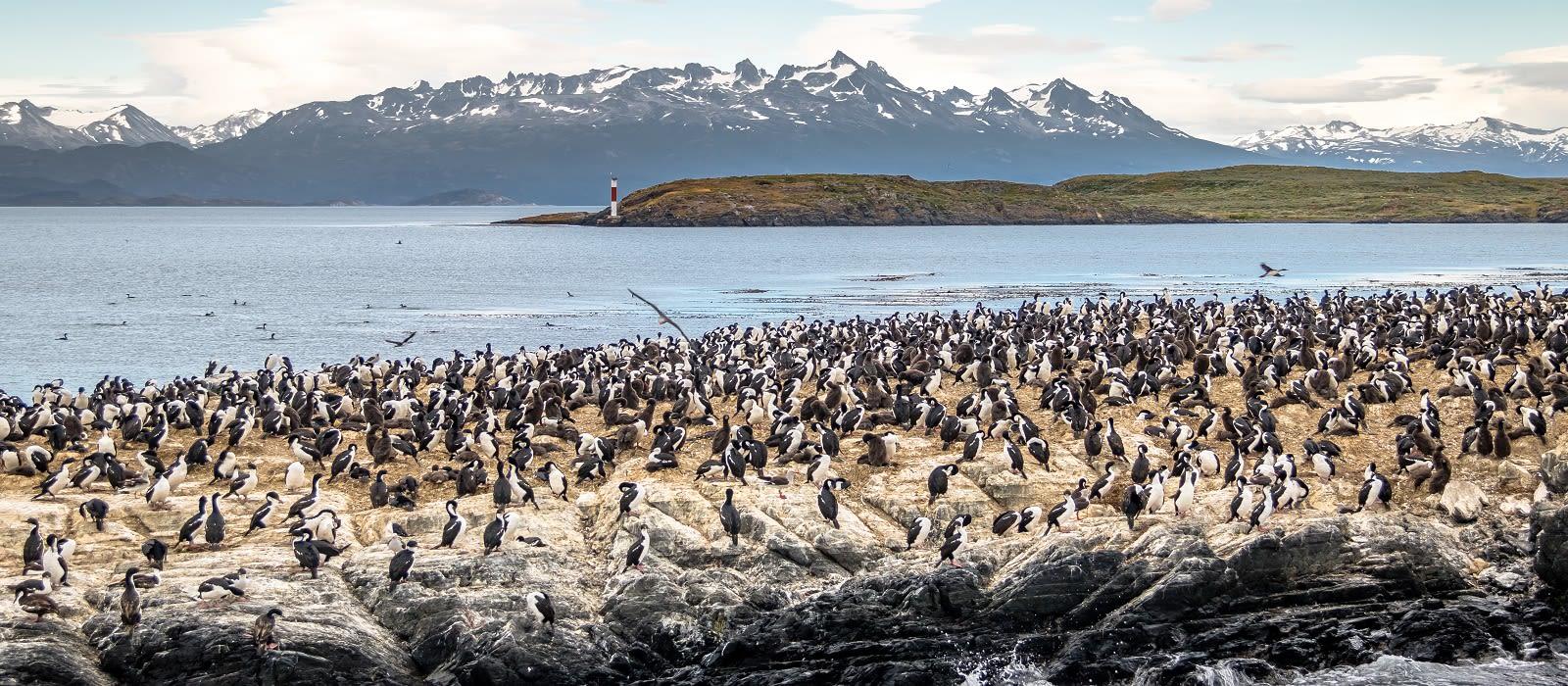 Adventures of the Southern Ocean: Falklands, South Georgia & Antarctica Tour Trip 2