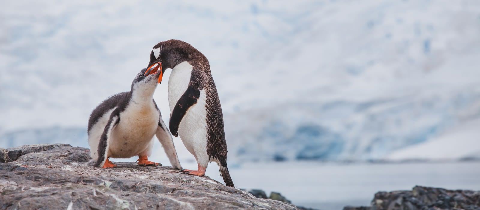 Argentinien & Antarktis – feuriger Tango und glitzernde Gletscher Urlaub 3