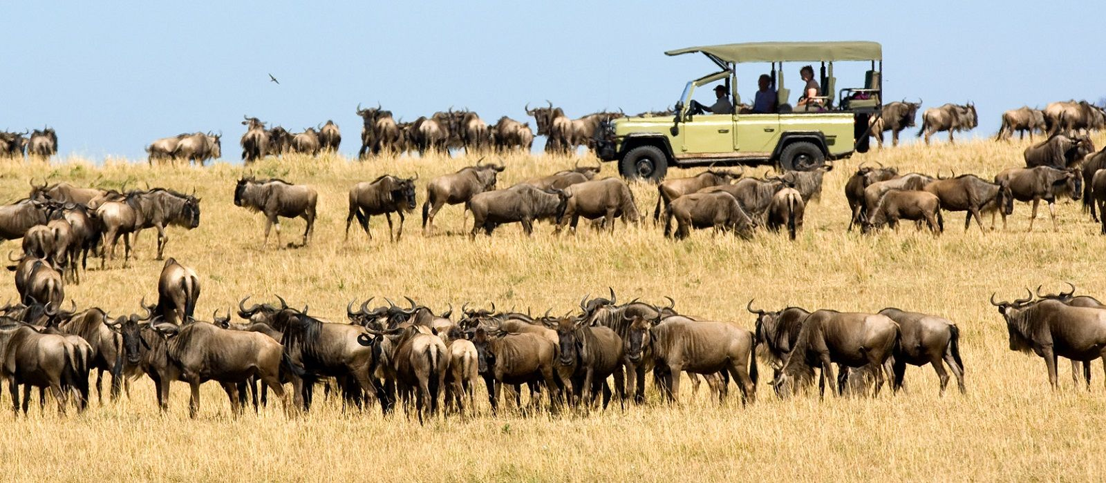 Wild Treasures of Northern Tanzania Tour Trip 1