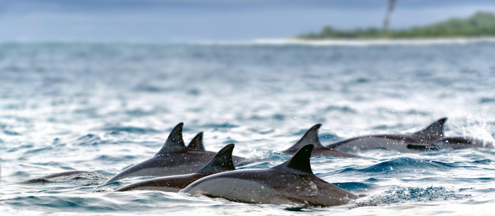 Seychellen: Inselparadies & The Moorings Kreuzfahrt Urlaub 3