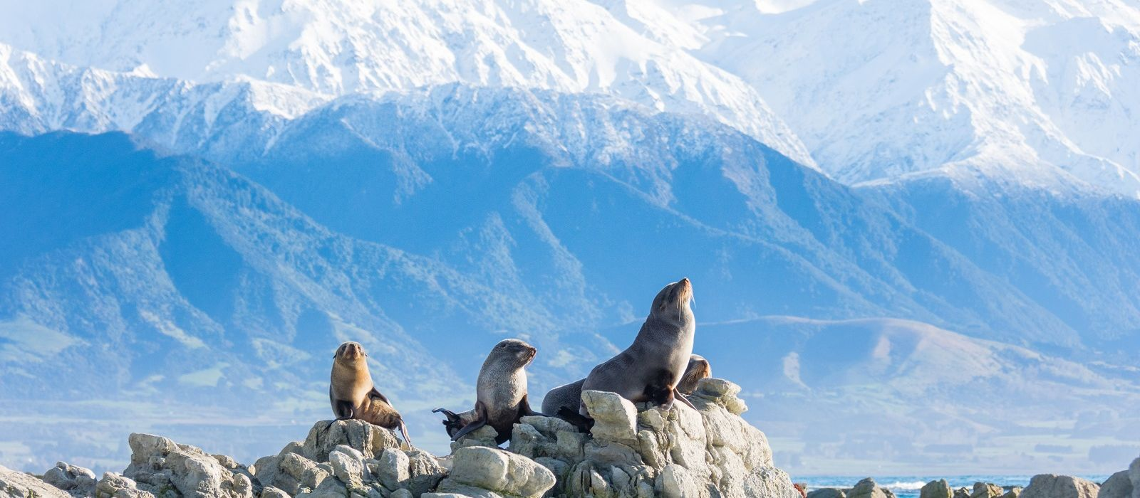New Zealand: Highlights of the North and South Islands Tour Trip 4