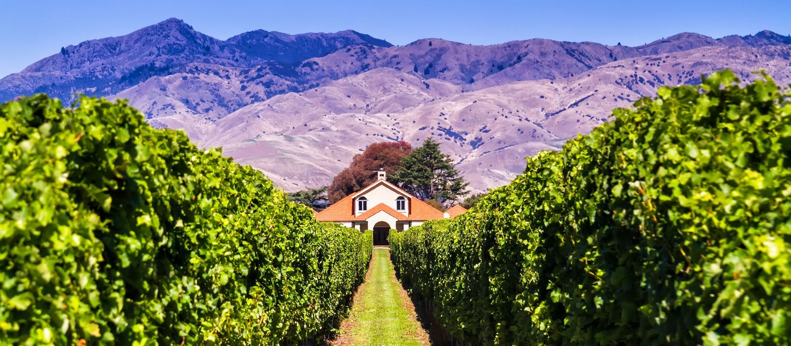 New Zealand: Art, Wine and Beach Tour Trip 3