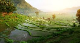 Reiseziel Bali Indonesien